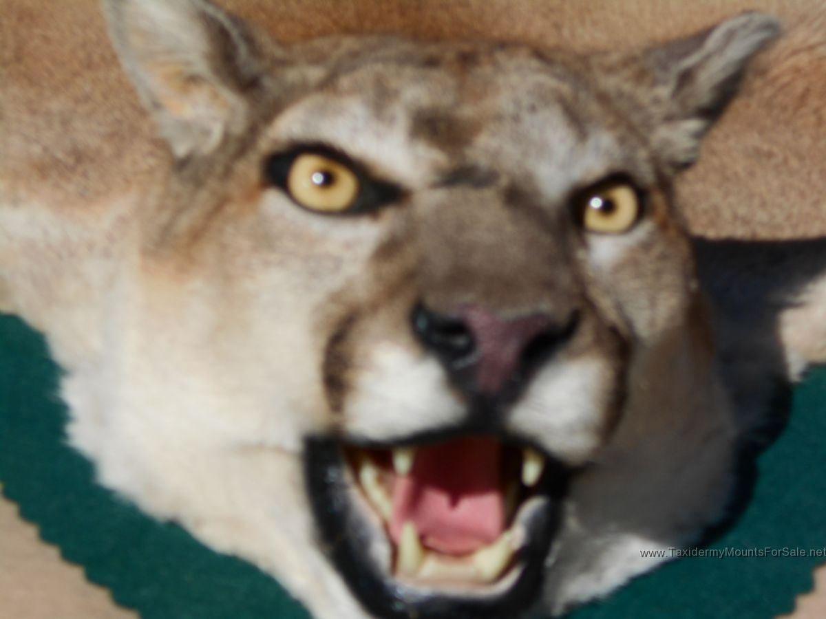 dating taxidermy Our editorial staff consists of highly skilled professionals who definitely know the ropes of the fascinating world of taxidermy individually, each is an expert in the field.